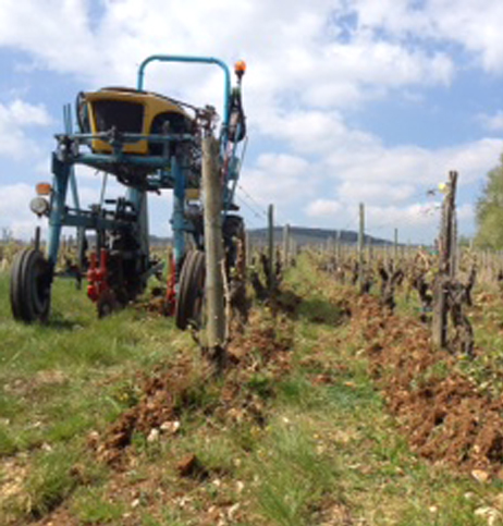 vineyard 1 web
